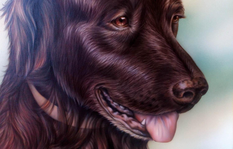 Labrador Finn