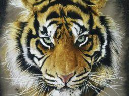 Tiger_34